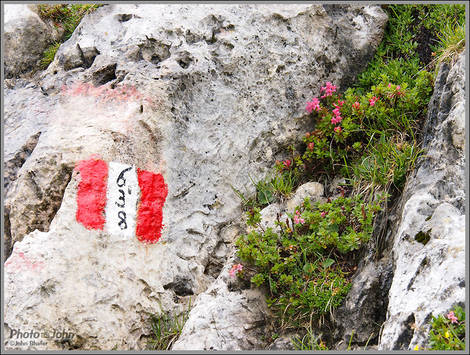 Dolomiti Trail Marker