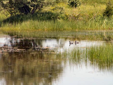 Illinois Farm Pond