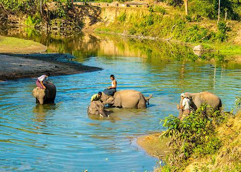 Elephant bathing 2