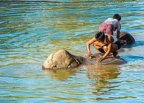 Elephant bathing 3