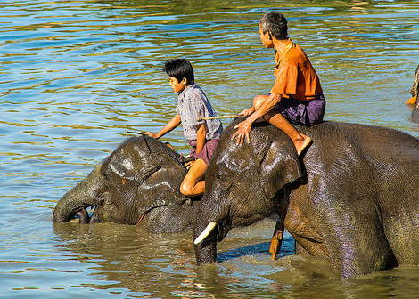 Elephant bathing 4