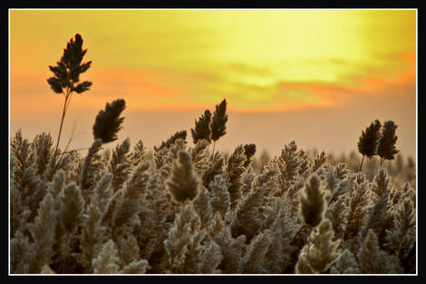 Sunrise and pampas