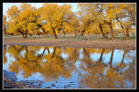 Yellow leaves & reflection 2