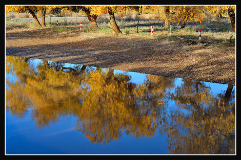 Yellow leaves & reflection