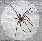 002_J_187_D60_VR70-300_Iso400_Flsh_12Jun10_Spider_svc687.jpg