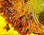 01_J_028_D60_VR55-200_Iso800_Ptx-T95_12Jun10_Bees_ugc686.jpg