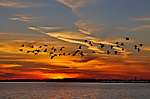 6_U_370_D90_VR55_I-320_20Jan13_Gulf-Intercoastal_Sunset_Geese_5_sgc699.jpg
