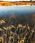 Winter_Wunderlight_contrasts.jpg