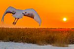 ghbirds_2.jpg