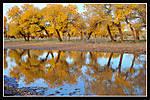 yellowtreereflection.jpg