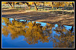 yellowtreereflection2.jpg